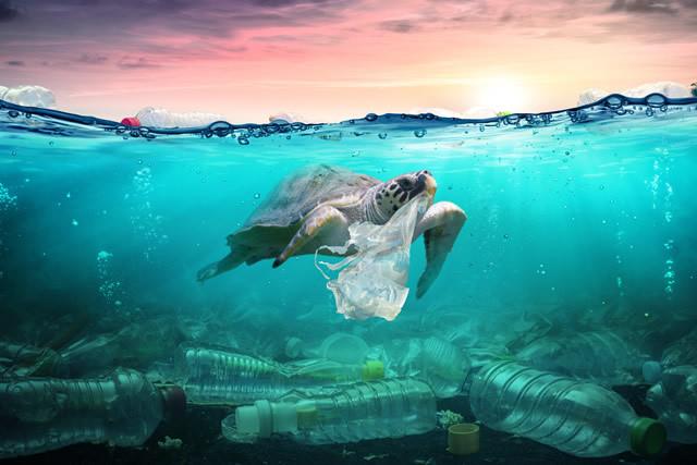海 の 豊か さ を 守 ろう